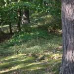Naturjuwel und Theatererlebnisland Litschau